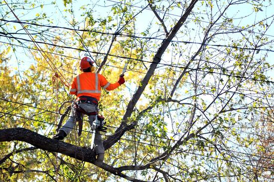 tree_service_powerlines